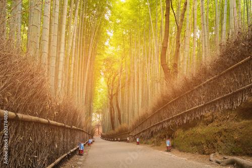 Plexiglas Bamboe Walking path leading Bamboo forest, natural landscape background