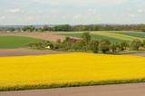 Blühendes Rapsfeld in oberschwäbischer Landschaft - 203795061