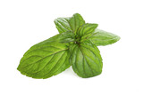Fresh mint leaves isolated on white - 203798630