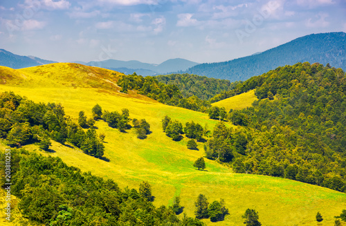 Plexiglas Meloen beautiful landscape of Krasna mountain ridge. grassy slopes and forested hill under the blue summer sky with fluffy clouds. location Carpathian mountains, Ukraine
