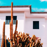 Cactus. Cactus Garden. Vacation. Canary Island - 203814088