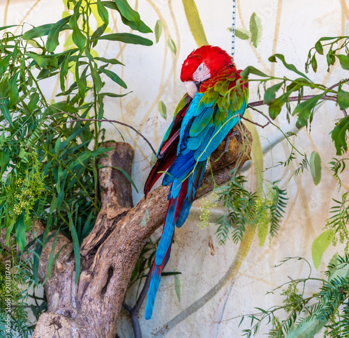 Fototapeta red and green macaw