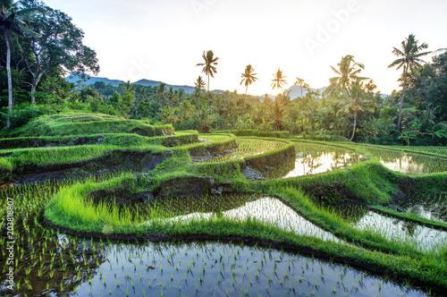 Fotobehang Bali Rice terraces on Bali during sunrise, Indonesia