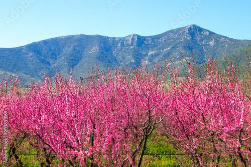 Fotobehang Crimson Beautiful flowers from the peach tree