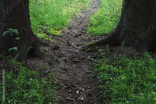 Fotobehang Weg in bos pathway between trees in spring forest with blooming shamrock