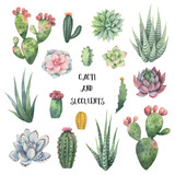 Watercolor vector set of cacti and succulent plants isolated on white background. - 203879238