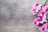 Beauty orchid on a gray background. Spa scene. - 203893479
