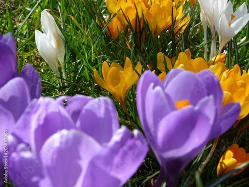 Foto Murales Die ersten Frühlingsboten