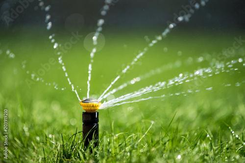 Fototapeta Sprinkler in action watering grass