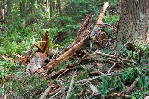 Plexiglas Canada Remains of a Tree