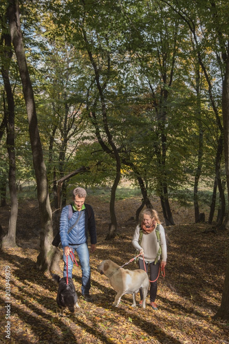 Young woman and adult man walk along with dogs, autumn in the forest