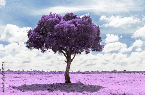 drzewo-fioletowe-w-salonowym-szyku