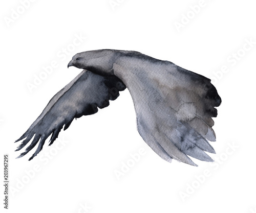Siberia. eagle in flight. isolated on white background. © luchioly