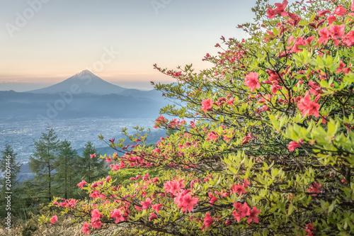 Plexiglas Azalea Japanese Azalea flower and Mountain Fuji in spring season. Azalea or Tsutsuji - Spring Flowers in Japan