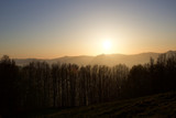 forest silhouette on the hills at sunset - 204039433