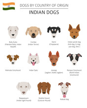 Dogs By Country Of Origin Indian Dog Breeds Infographic Template Sticker