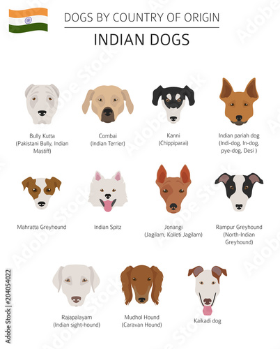 Dogs by country of origin. Indian dog breeds. Infographic template