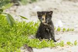 Junges, wildes Kätzchen am Strand
