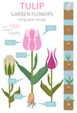 Tulip varieties flat icon set. Garden flower and house plants infographic - 204060252