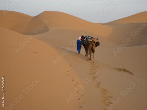 Plexiglas Marokko Camels near Erg Lehoudi, Mhamid Desert, Morocco