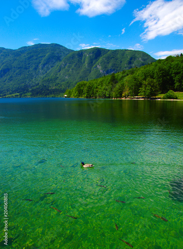 Fotobehang Groene Mountain lake with clear water