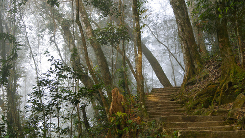 misty asian forest