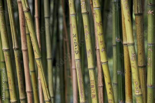 Plexiglas Bamboe Engravings on the bamboos