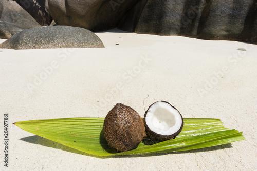 Plexiglas Fyle Coconut in the Seychelles