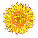 Vector round composition with outline yellow Sunflower or Helianthus flower in yellow isolated on white background. Floral elements in contour style with ornate Sunflower for summer design.