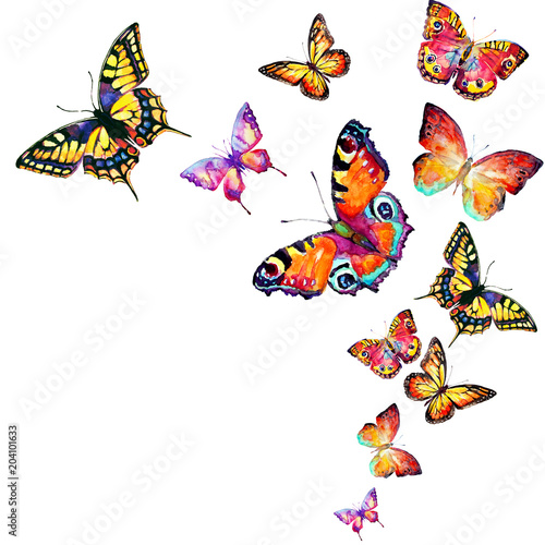 Fototapeta beautiful color butterflies, set, watercolor, isolated on a white