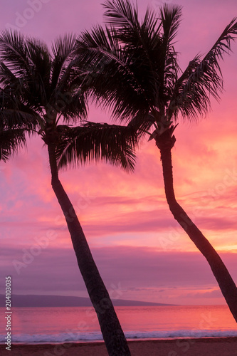 Palm Trees Silhouetted in a  Maui Sunset