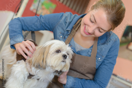 Fototapeta Pet groomer with small dog