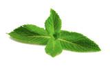 Fresh mint  on white background - 204143409