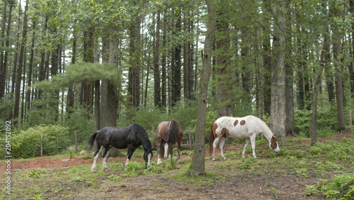 Plexiglas Paarden Horses Grazing