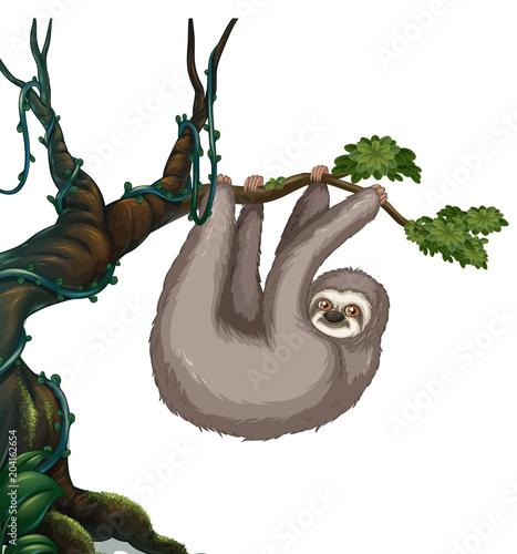 Plexiglas Kids Sloth hanging on the tree