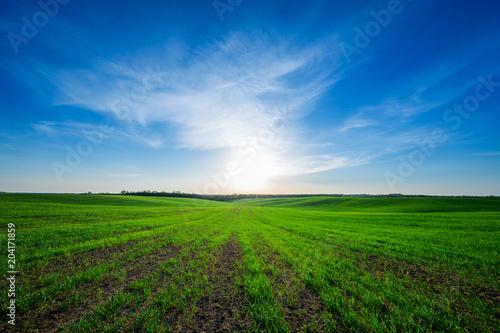 Fotobehang Groene Green field,blue sky and sun.