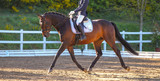 Horse Braun in a dressage test, photographed in trot in the floating phase.. - 204186471