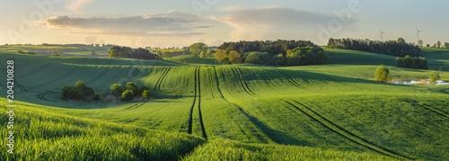 Plexiglas Lente green, shiny fields of young grain on wavy fields in Germany - High resolution panorama