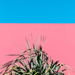 Fashion content. Plant on the pink. Green