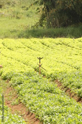 Plexiglas Zwavel geel Adriculture, field, Brazil