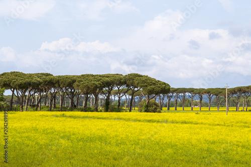 Fotobehang Toscane Rural landscape in the Italian Tuscany
