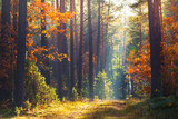 Autumn forest scene © alexugalek
