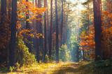 Fototapeta Las - Autumn forest scene © alexugalek