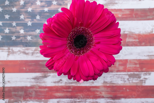 Fotobehang Gerbera Gerbera daisy flower on USA flag background with room for text