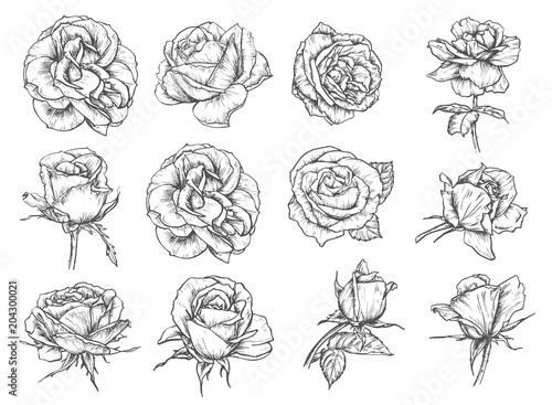 Vector flowers roses sketch icons
