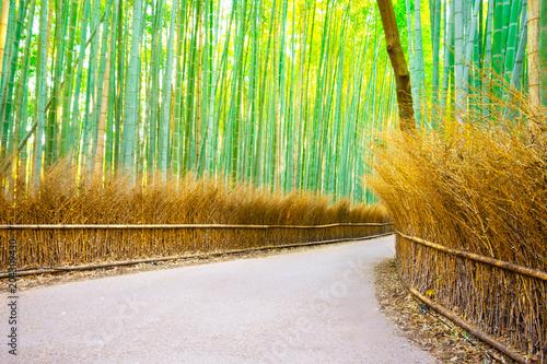 Plexiglas Bamboe Bamboo Groves at Arashiyama in Kyoto,Japan.