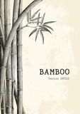 Bamboo background hand drawing engraving style