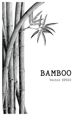 Bamboo background hand drawing engraving style © channarongsds