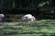 Pelican photography art in zoo wild life
