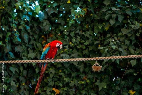 Fotobehang Papegaai Parrot
